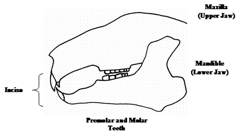 Dental Malocclusion figure 1