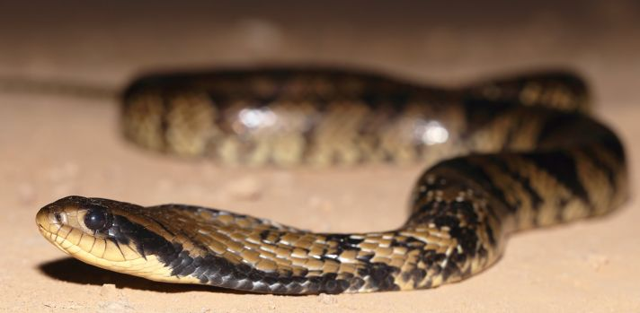 New study calls for greater understanding of the needs of captive snakes