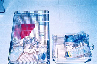 Enriched and unenriched mouse cages of different sizes with choice of water bottles, one containing an anxiolytic