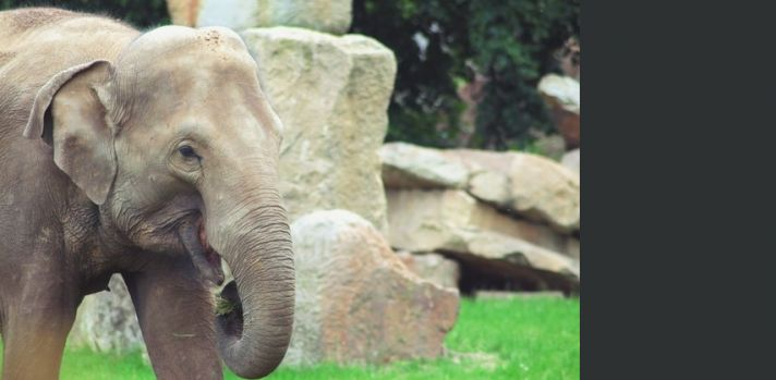 Want happy elephants?  Ask the experts