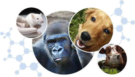 animal welfare A subchapter a animals and animal products animal and plant health inspection service, department of agriculture subchapter a—animal welfare pt 1 part 1—definition of terms authority.